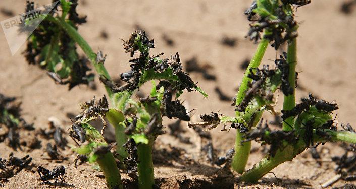 Plagas en la vegetación (imagen referencial)