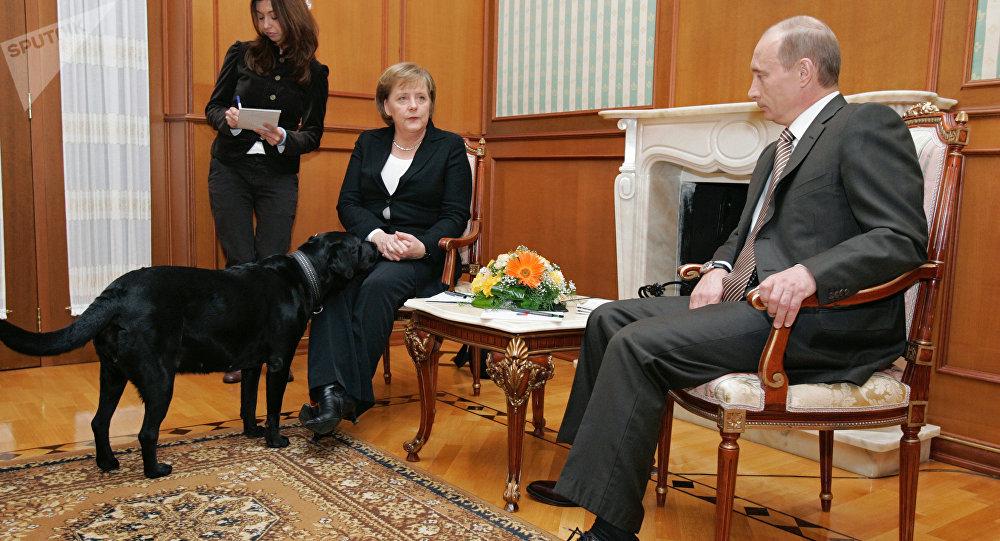 Labrador Koni del presidente ruso durante el encuentro de Vladímir Putin con Angela Merkel