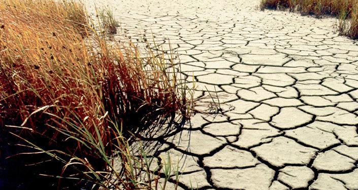 Estudio revela que 2016 fue el año más cálido de la historia