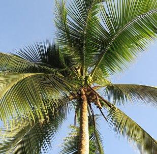 Una palmera (imagen referencial)