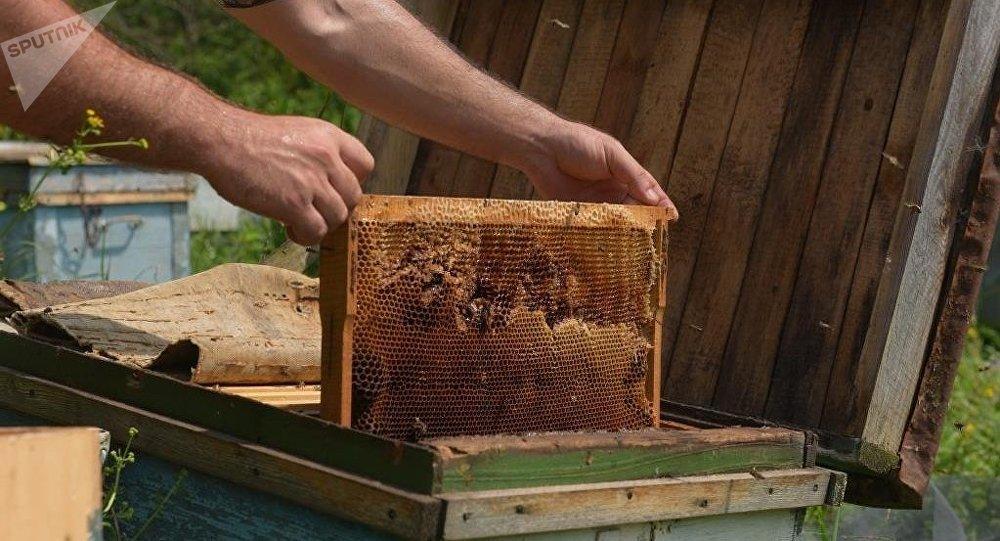 Un apicultor toma un marco con una colmena llena de miel (archivo)