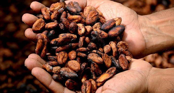 Cacao (imagen referencial)
