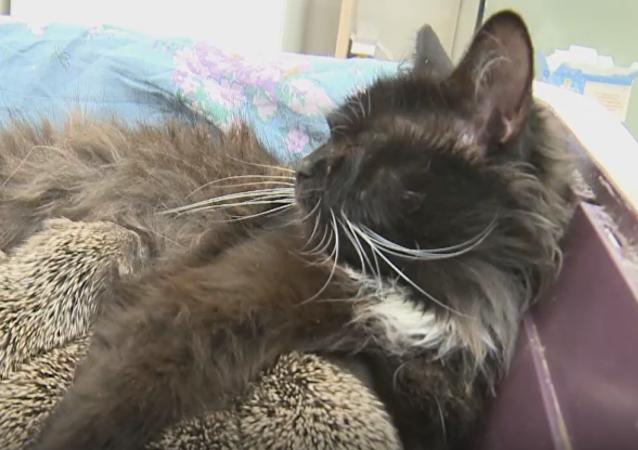 La gata Musia que salvó a unos erizos bebé