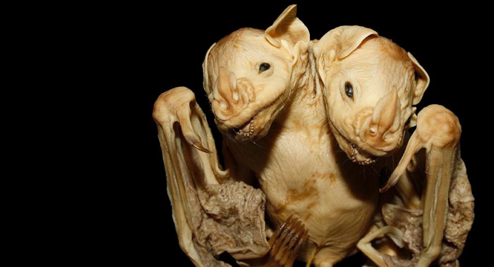 El murciélago de dos cabezas
