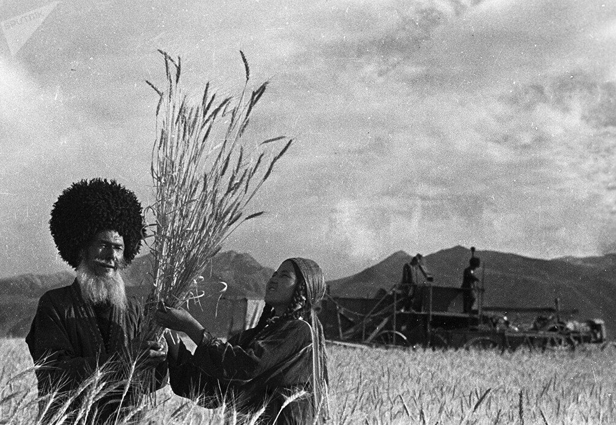 Cosecha de trigo en una granja cooperativa —koljós— de Turkmenistán