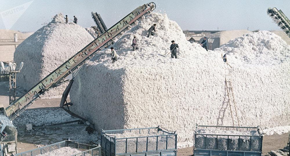 La cosecha de algodón en los tiempos de la URSS (archivo)
