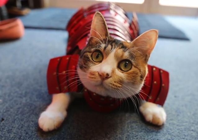 ¡Convierte a tus gatos y perros en samuráis!