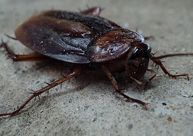 Una cucaracha (imagen referencial)