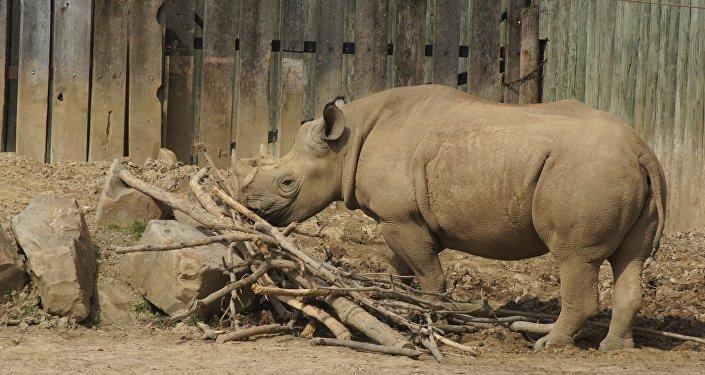 Rinoceronte (imagen referencial)