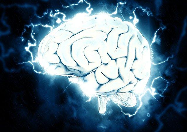 Cerebro, imagen referencial