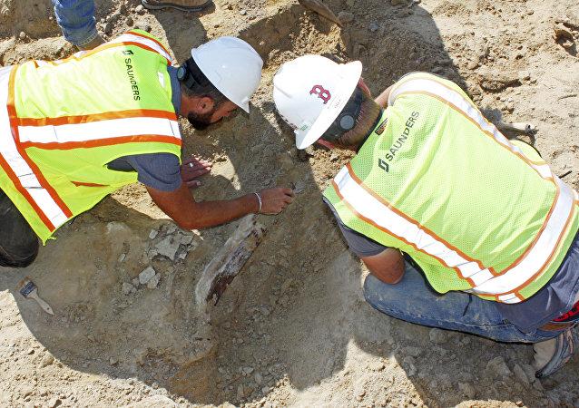 Fósil de un triceratops hallado en la ciudad estadounidense de Thornton