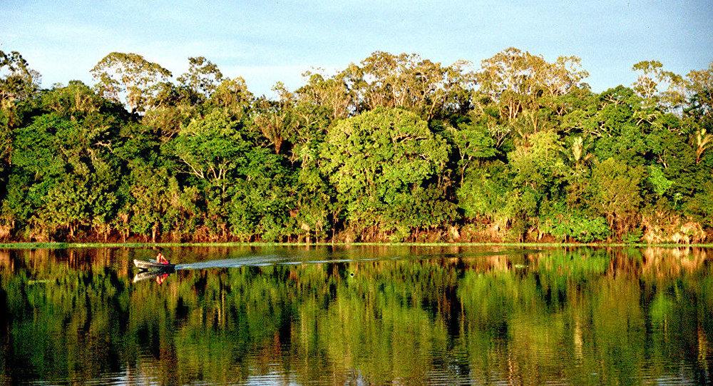 Bosques amazónicos
