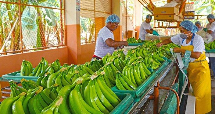Productos de la misión de bananeros de Ecuador