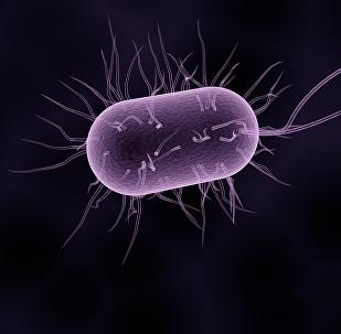 Bacteria (ilustración gráfica)