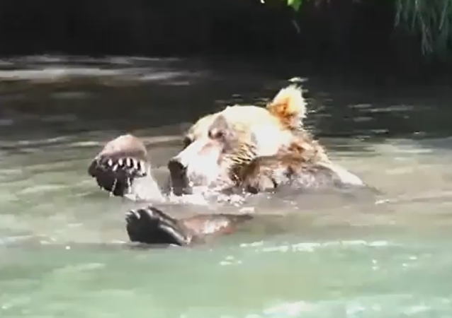 El oso Casanova