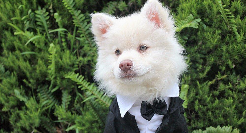 Un perro de traje