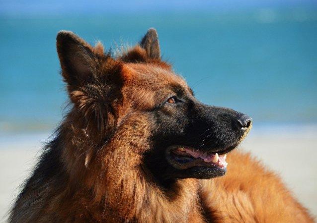 Un perro en la playa (imagen referencial)