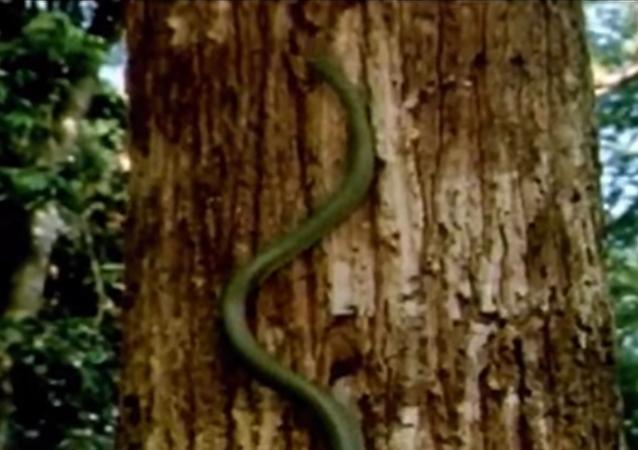 Las 'serpientes voladoras' muestran todo su potencial