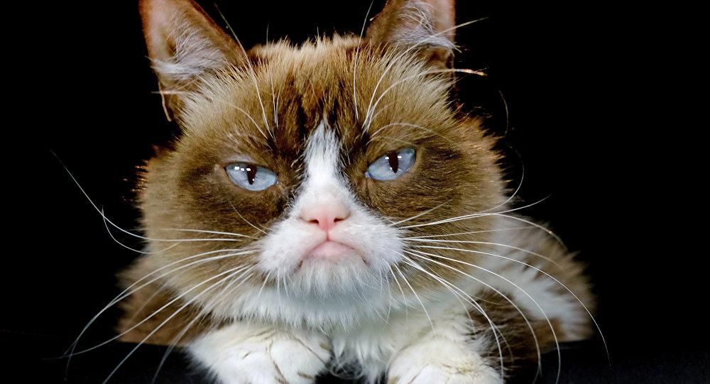 Grumpy Cat (archivo)
