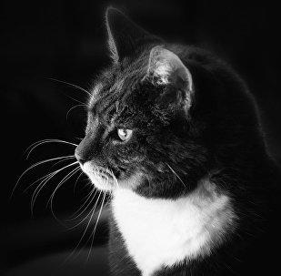 Un gato en blanco y negro
