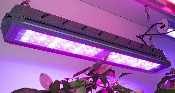 Luminarias de la empresa rusa Incotex para el sector agrícola