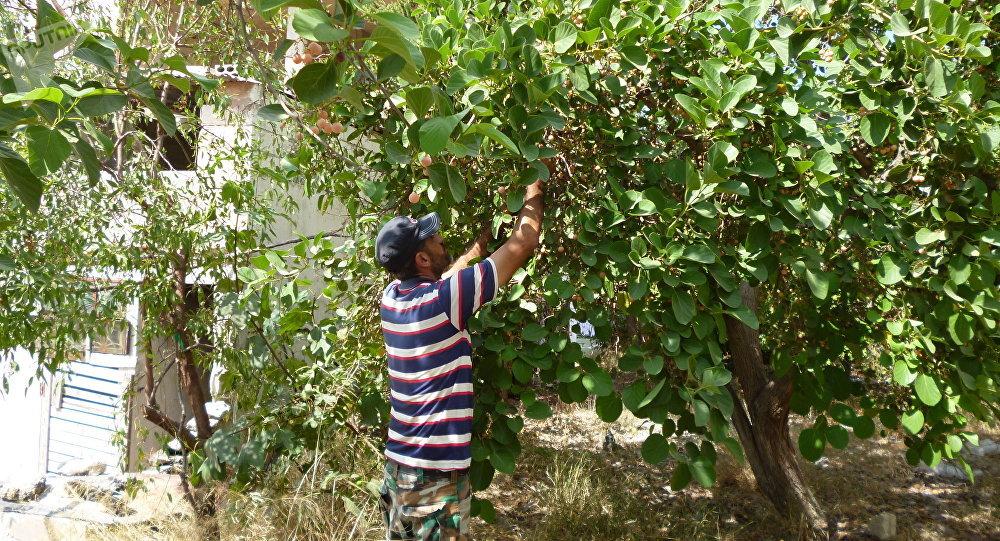 Caza pesca y horticultura as sobreviven los sirios en tiempos de guerra fotos v deo - Plante qui attire les moustiques ...