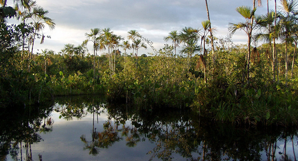 Parque Yasuní, Amazonía