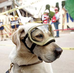 El perro-rescatista Frida