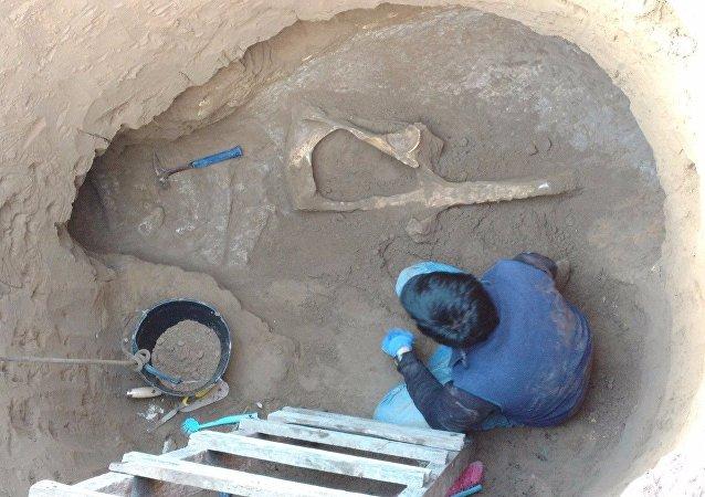 Encuentran el fósil de un Panochthus mientras cavaban un pozo en el terreno de una casa en Argentina