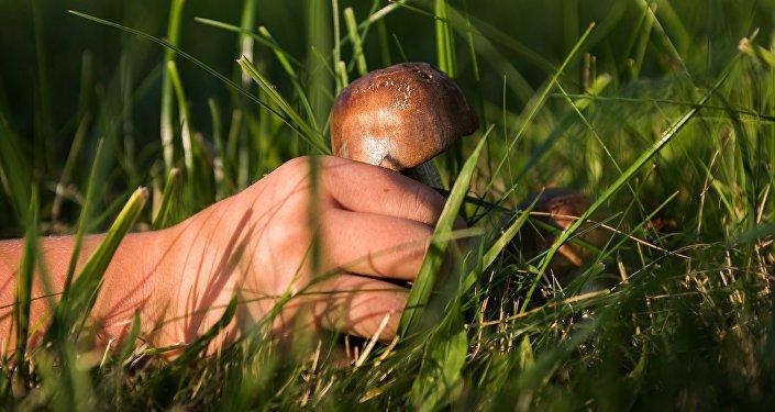 Un recolector de setas (imagen referencial)