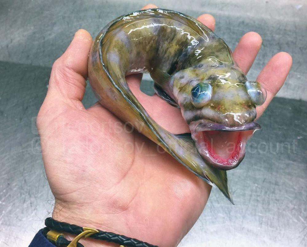 Las extraordinarias y espeluznantes criaturas que habitan en las profundidades del mar