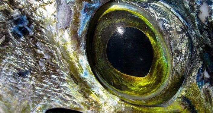 El ojo de un pez
