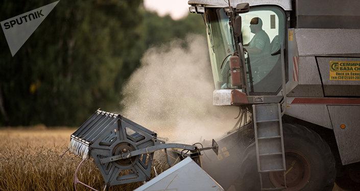 La cosecha de trigo en Rusia