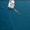 Un tiburón acosa a unos pescadores australianos