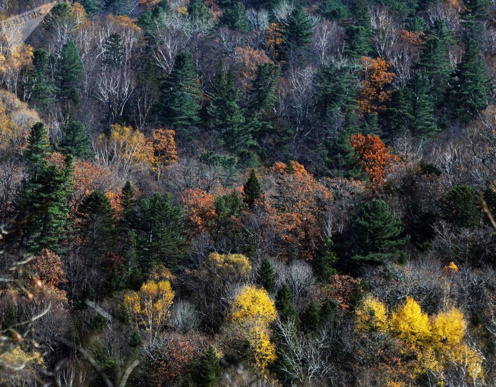 Así llega el otoño a uno de los rincones más lejanos de Rusia