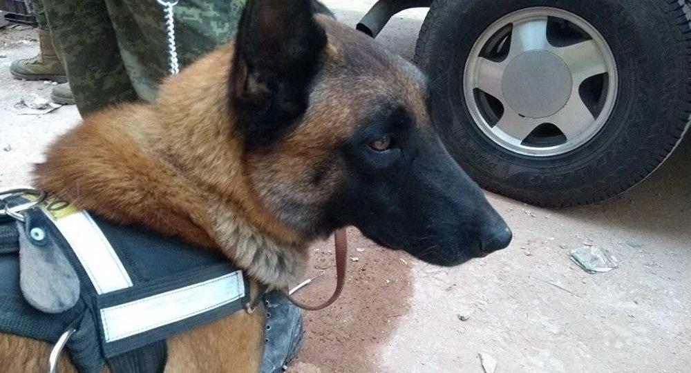 Un perro rescatista de  de la Secretaría de Marina-Armada de México