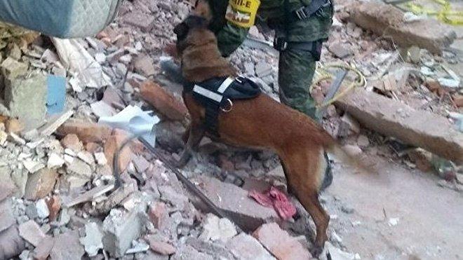 Perros de busqueda y rescate de la Secretaría de Marina-Armada de México