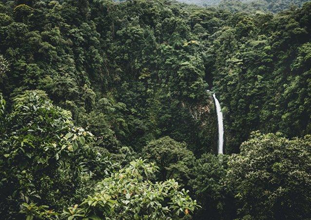 Amazonia (imagen referencial)