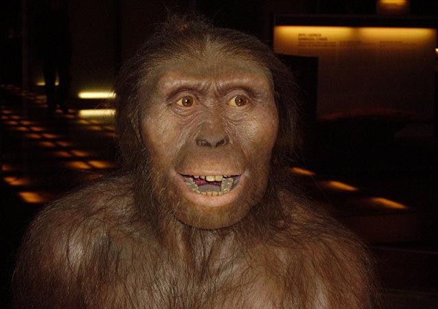 Australopithecus afarensis, homínido extinto