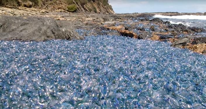 Miles de seres marinos agonizan en una playa australiana de forma inexplicable