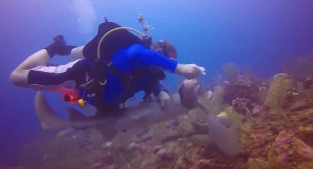 Pelea submarina: un buzo lucha contra un tiburón por un pez