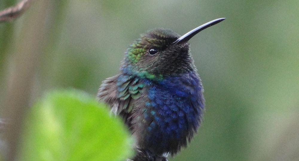 Una ave peruana