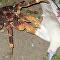 Un cangrejo se abalanza sobre un pájaro y se lo come