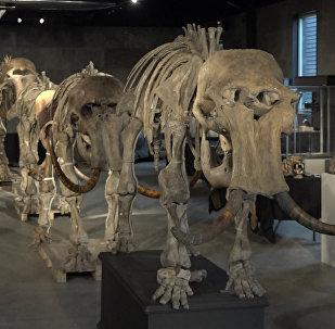 El esqueleto de un mamut
