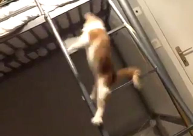 El gato acróbata más ágil del mundo sorprende a todos con sus volteretas
