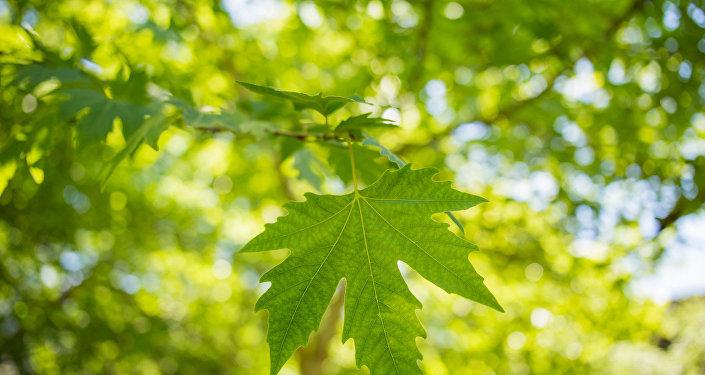 Una hoja verde (imagen referencial)
