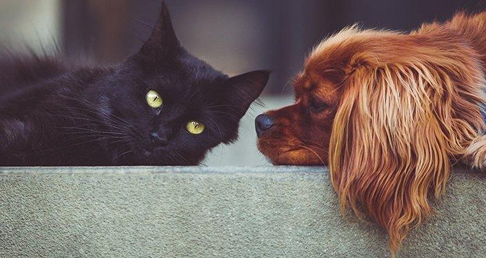 Un gato y un perro (imagen referencial)