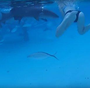 Marido graba cómo su esposa es atacada por un tiburón
