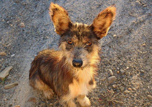 Un perro, imagen referencial
