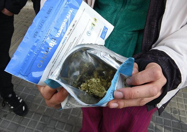 Una variedad del cannabis legal en Uruguay